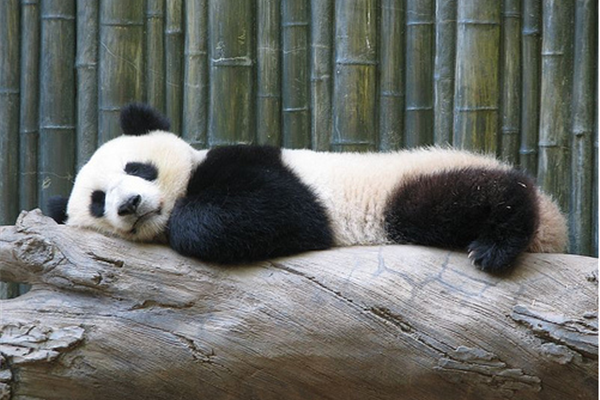 Endangered Species in China