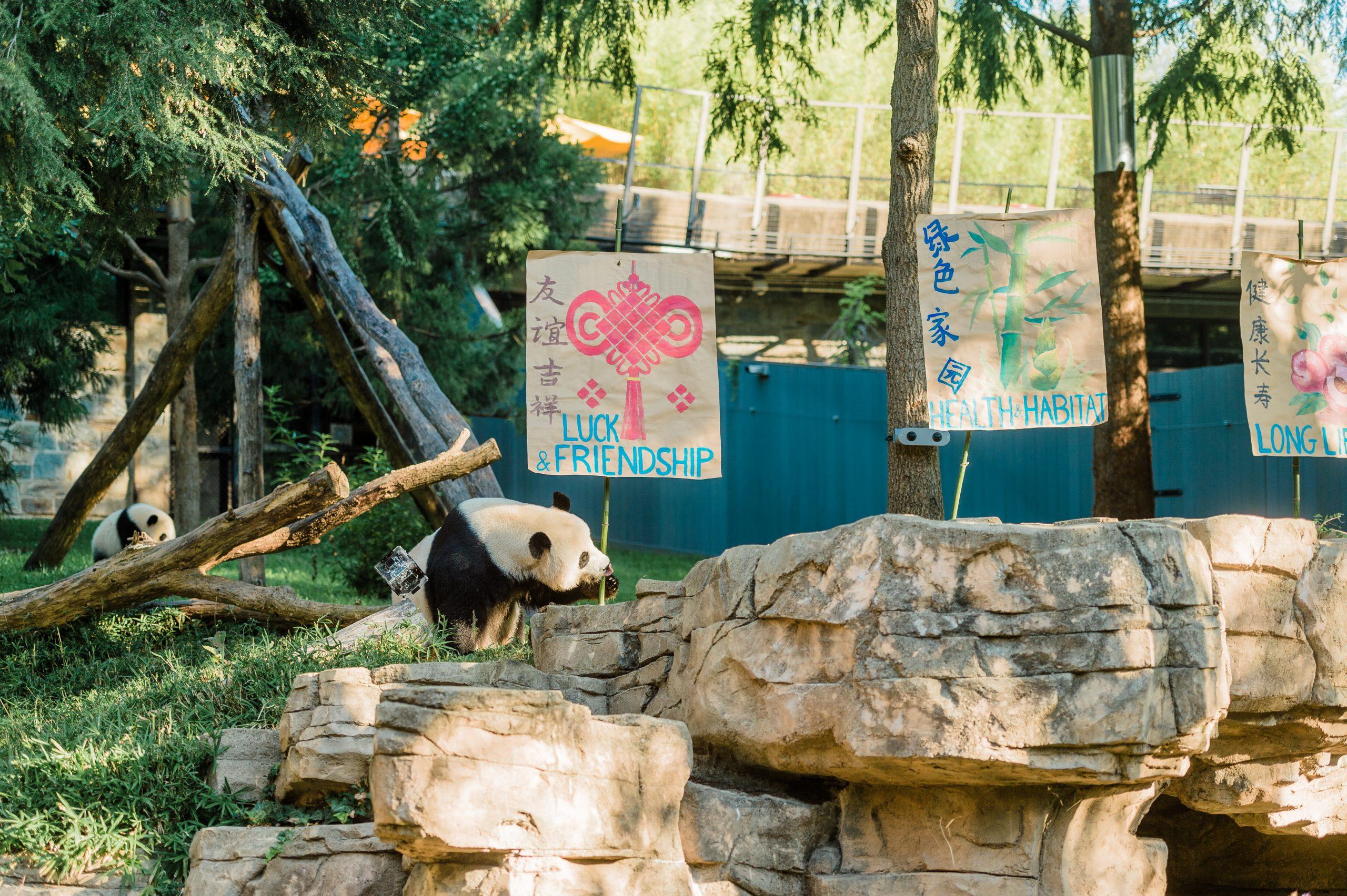 Pandemics and Pandas: China's Global Image in 2021